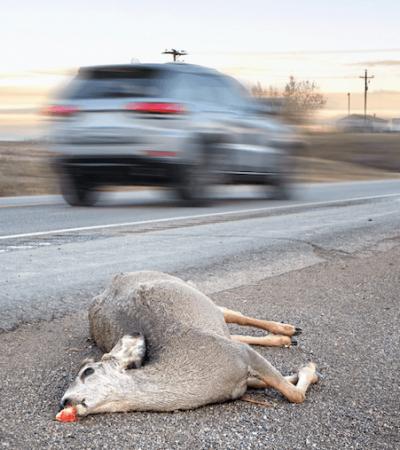 seguro, daños, atropello, animales, animales domésticos, especies cinegéticas